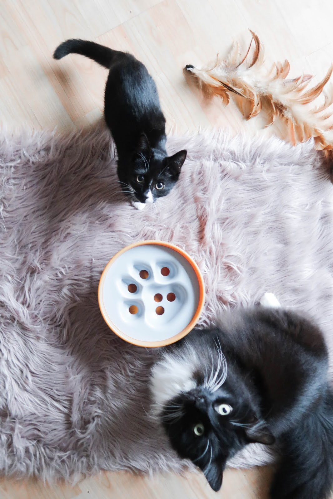 Paw5 puzzle feeder cat toy review