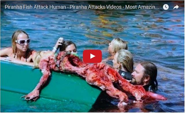Piranha Fish Attack Human - Piranha Attacks Videos - Most Amazing