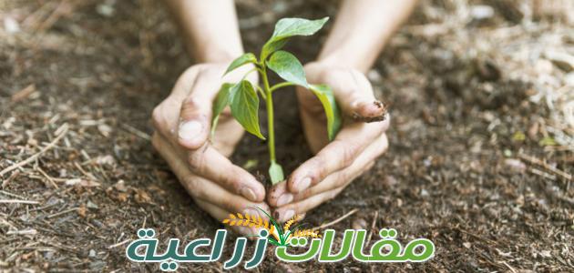كيف تزرع شجرة بطريقة صحيحة ؟ - مقالات زراعية