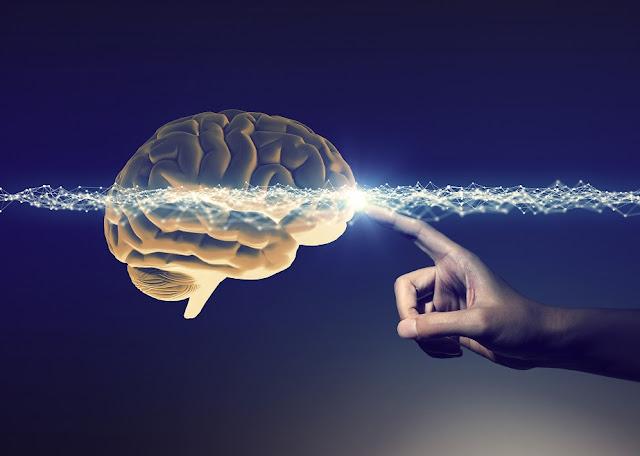 Illustrazione figurativa del cervello umano
