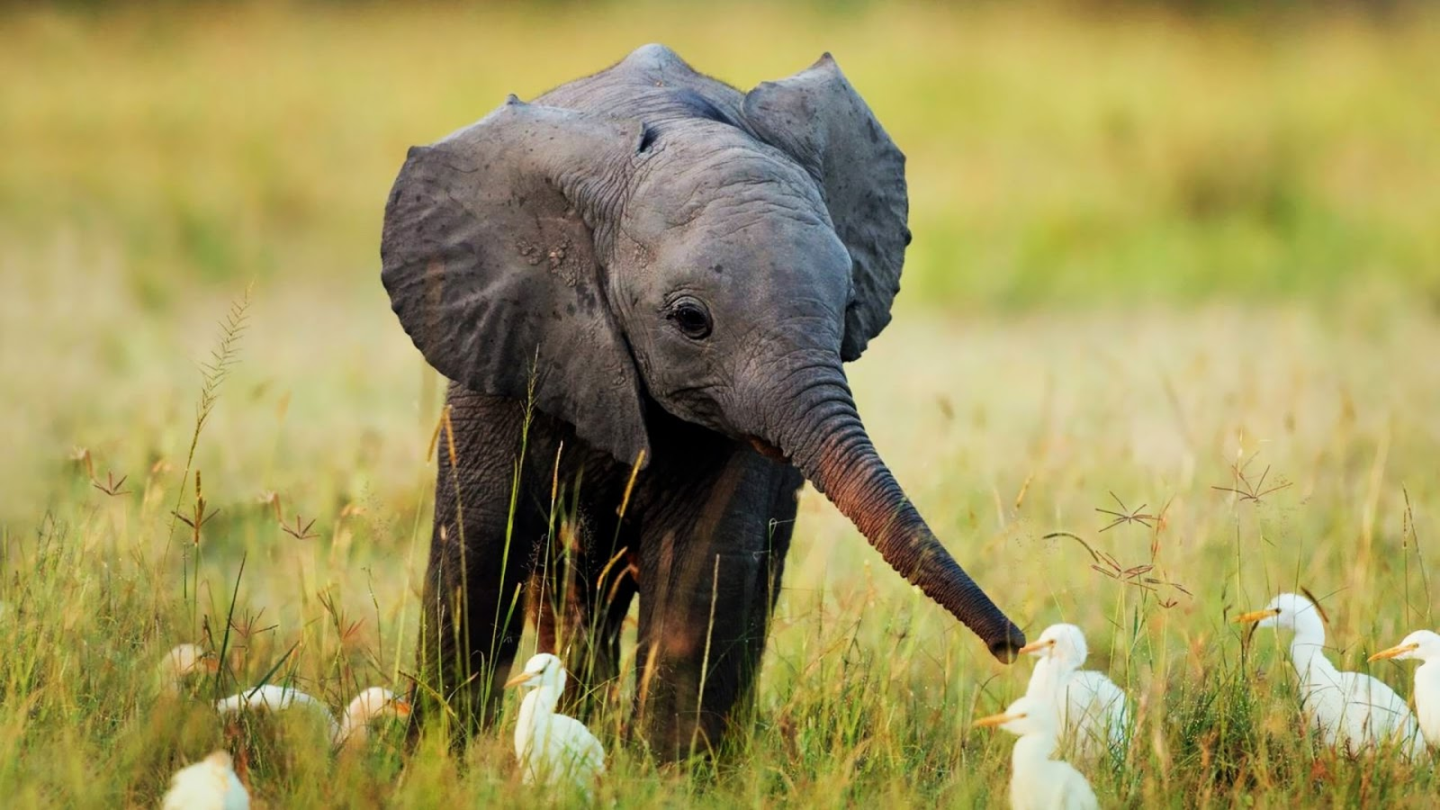 Fieggentrio is dit pasgeboren olifantje overleden wat for 1 park terrace glastonbury