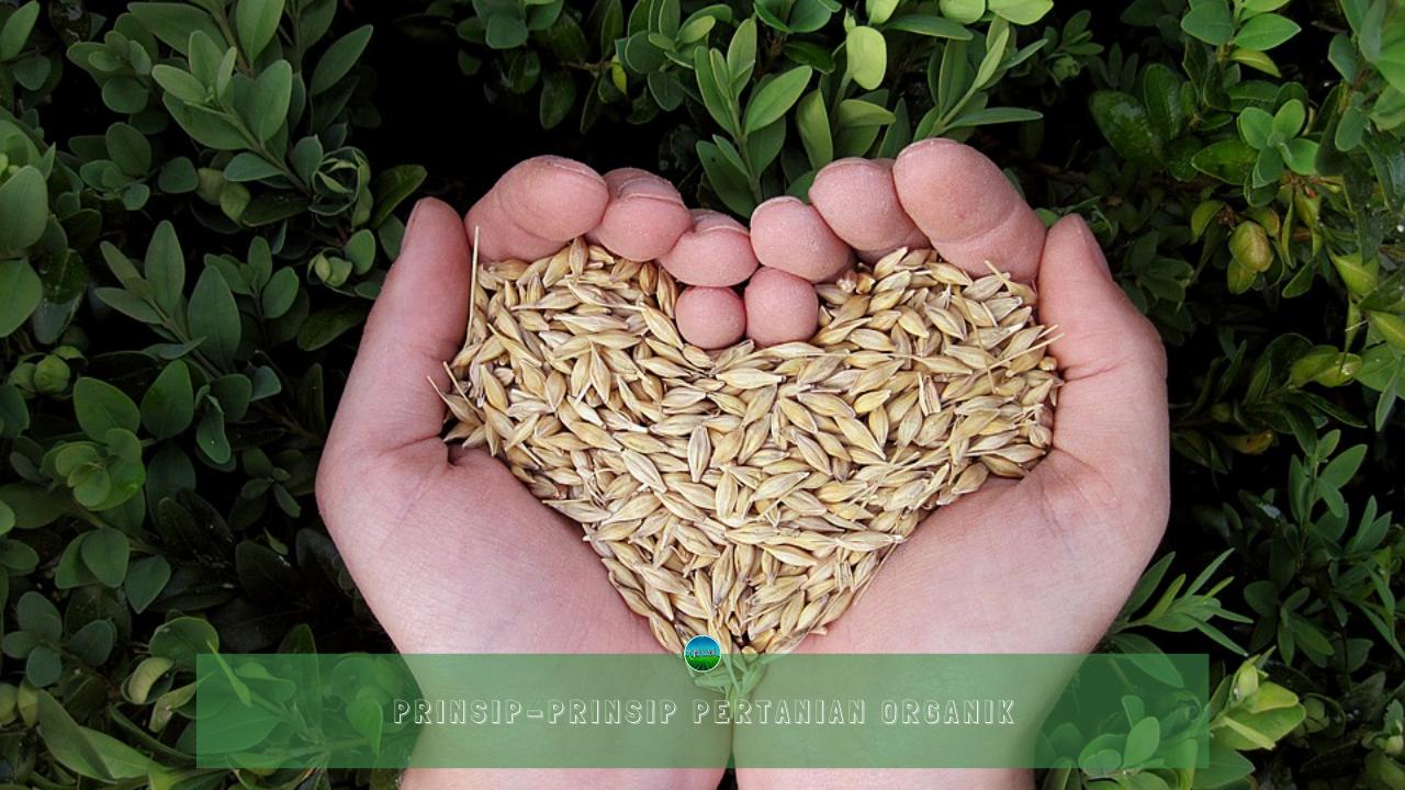 Prinsip-Prinsip Pertanian Organik
