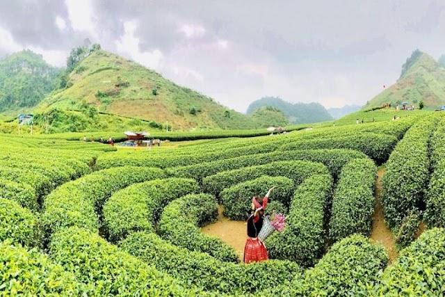 Chia sẻ kinh nghiệm du lịch Mộc Châu về di chuyển và cư chú