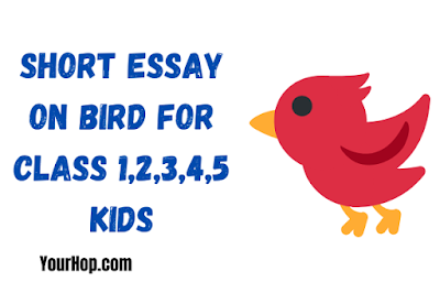 Essay on Bird