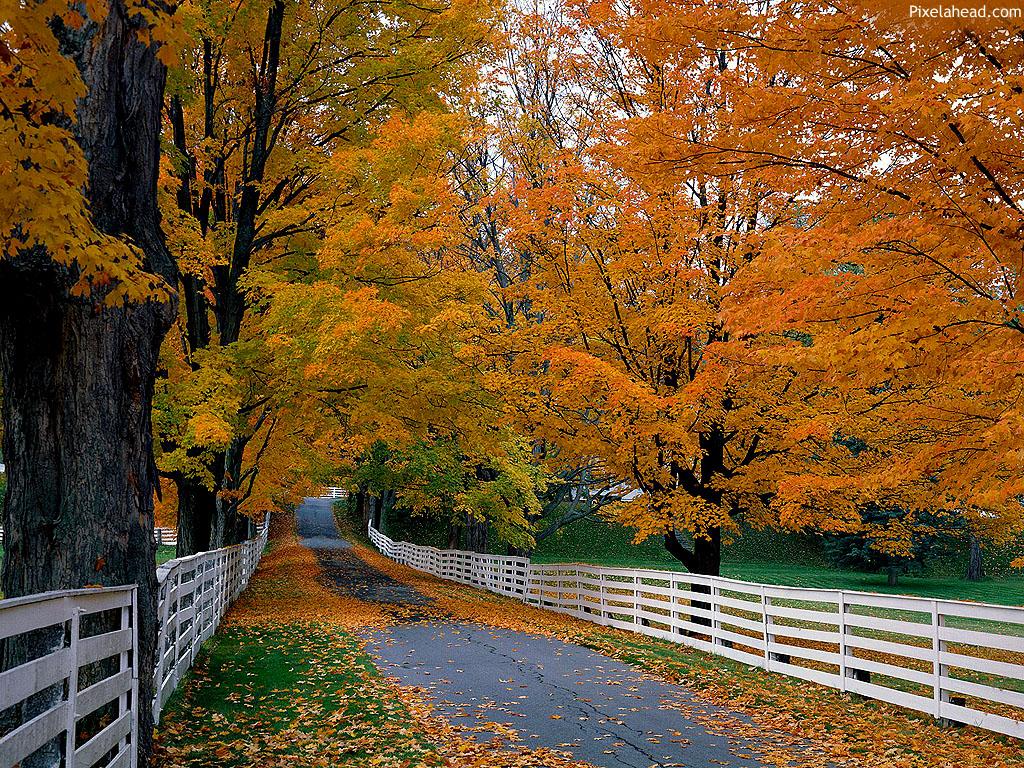 fun fall wallpaper - photo #3