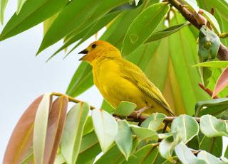 paisaje-aves-y-mariposas-complemento-en-fotografias fotografías