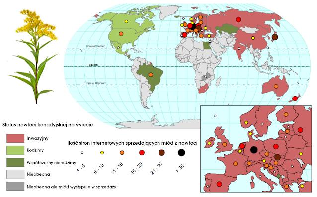 Mapa zasięgu nawłoci i miodu nawłociowego