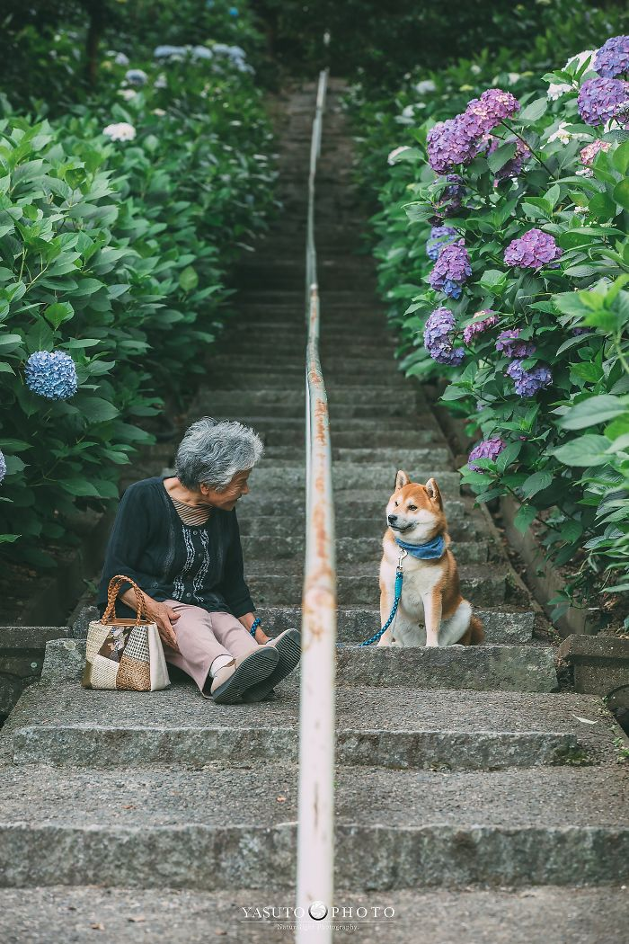 Photographer Captures 20 Heartwarming Photos Of His Grandma And Her Shiba Inu