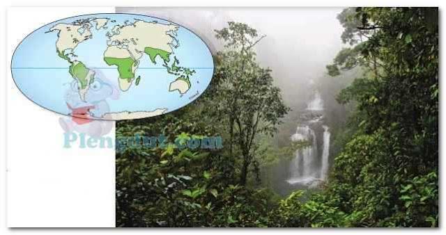 Sebaran hutan hujan tropis dunia: bisa kalian lihat cakupan wilayah Indonesia masuk dalam ciri tipe hutan tropis.