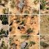 Ratusan Gajah Afrika Mati Misterius, Penyakit Baru?