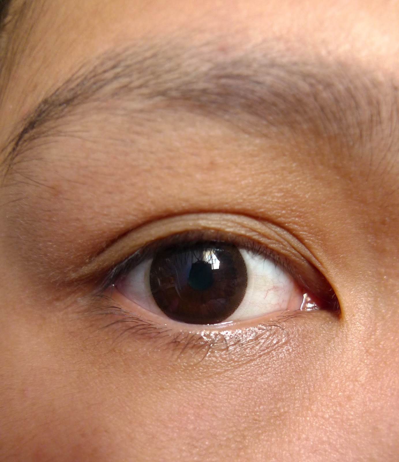 Review: Freshlook Illuminate Dailies Contact Lens in Rich ...