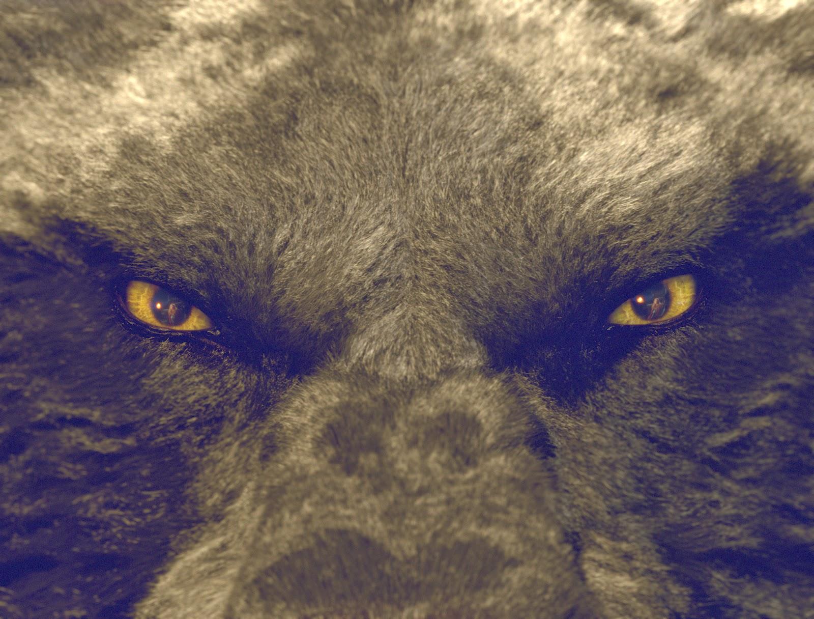 Dokarmianie Wilków, Czerwony kapturek, Red Riding Hood, Dziewczyna w Czerwonej Pelerynie, Zmierzch, Meyer, Belle, Bracia Grimm, Baśnie na Warsztacie, Mateusz Świstak