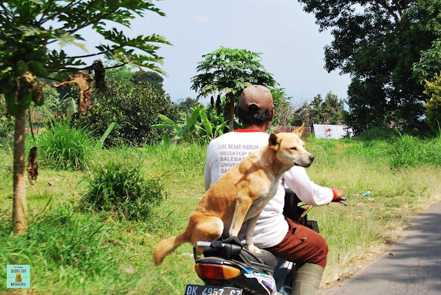 Conducir moto en Bali