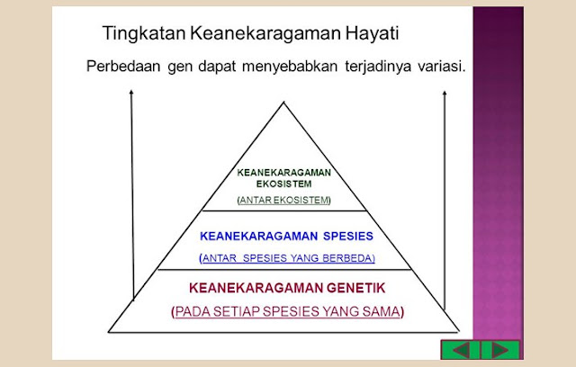 Keanekaragaman Gen, Keanekaragaman Spesies, Keanekaragaman Ekosistem