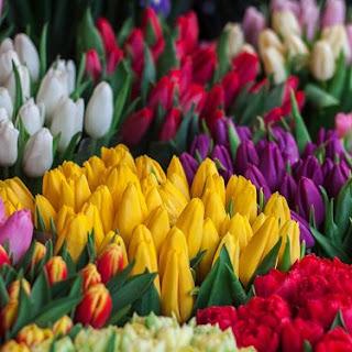 arti warna bunga