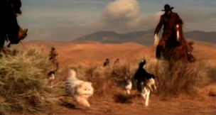 Cowboy Cat Herder Video