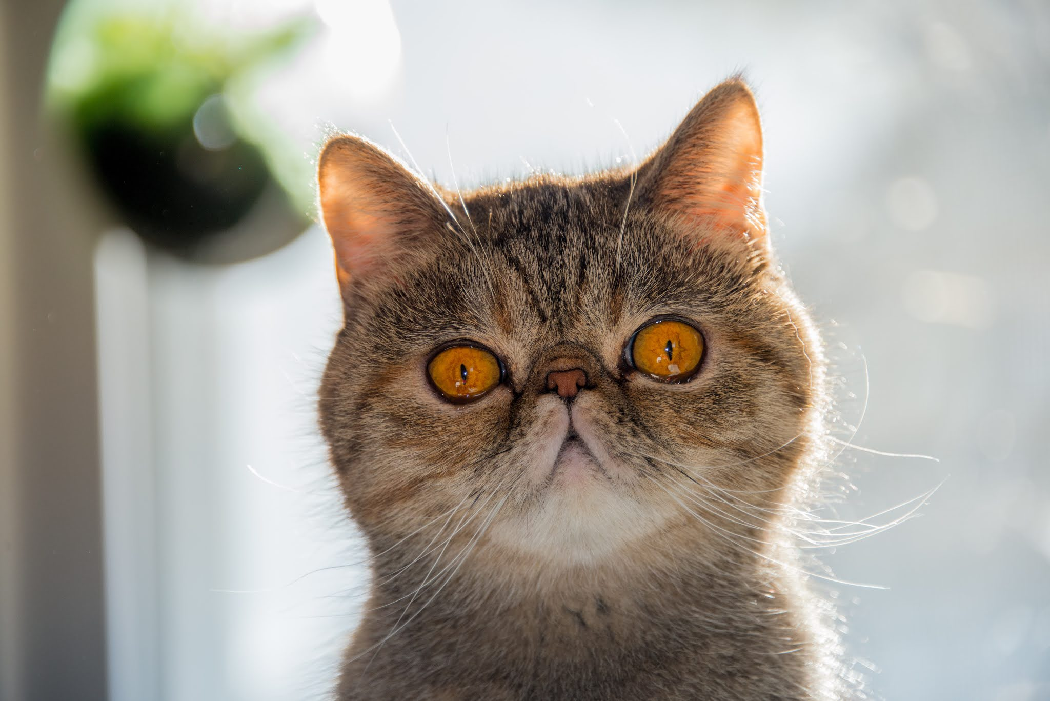 Many facts about cats that you should know