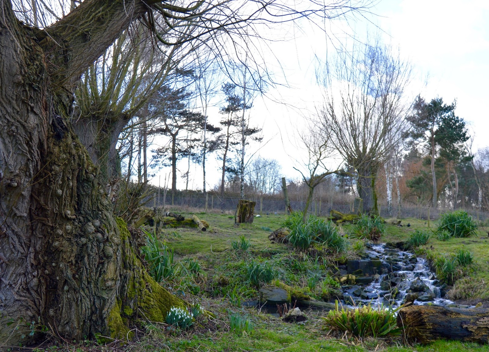 WWT Washington Wetland Centre | An Accessible North East Day Out for the Whole Family - waterfall and snowdrops in animal enclosure
