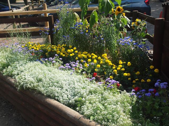 Godstone Farm, Surrey Review - flowerbeds
