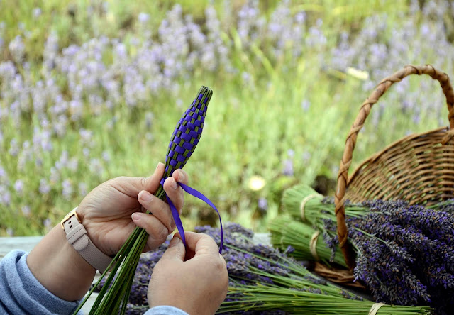 Pelindaba Lavender shows how to weave Aromatic Lavender Wands