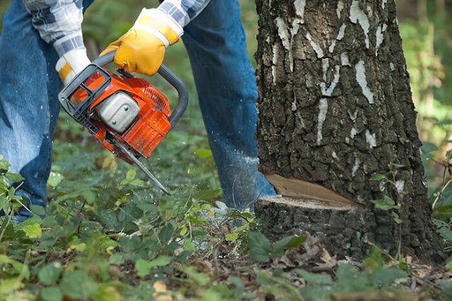 tree-removal-service-in-CA