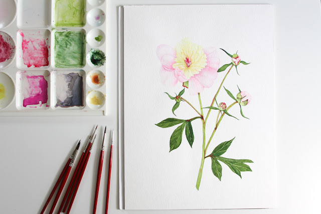 watercolor, peonies, botanical, Anne Butera, My Giant Strawberry