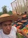 Campina da Lagoa tem primeiro produtor de tomate orgânico com certificação