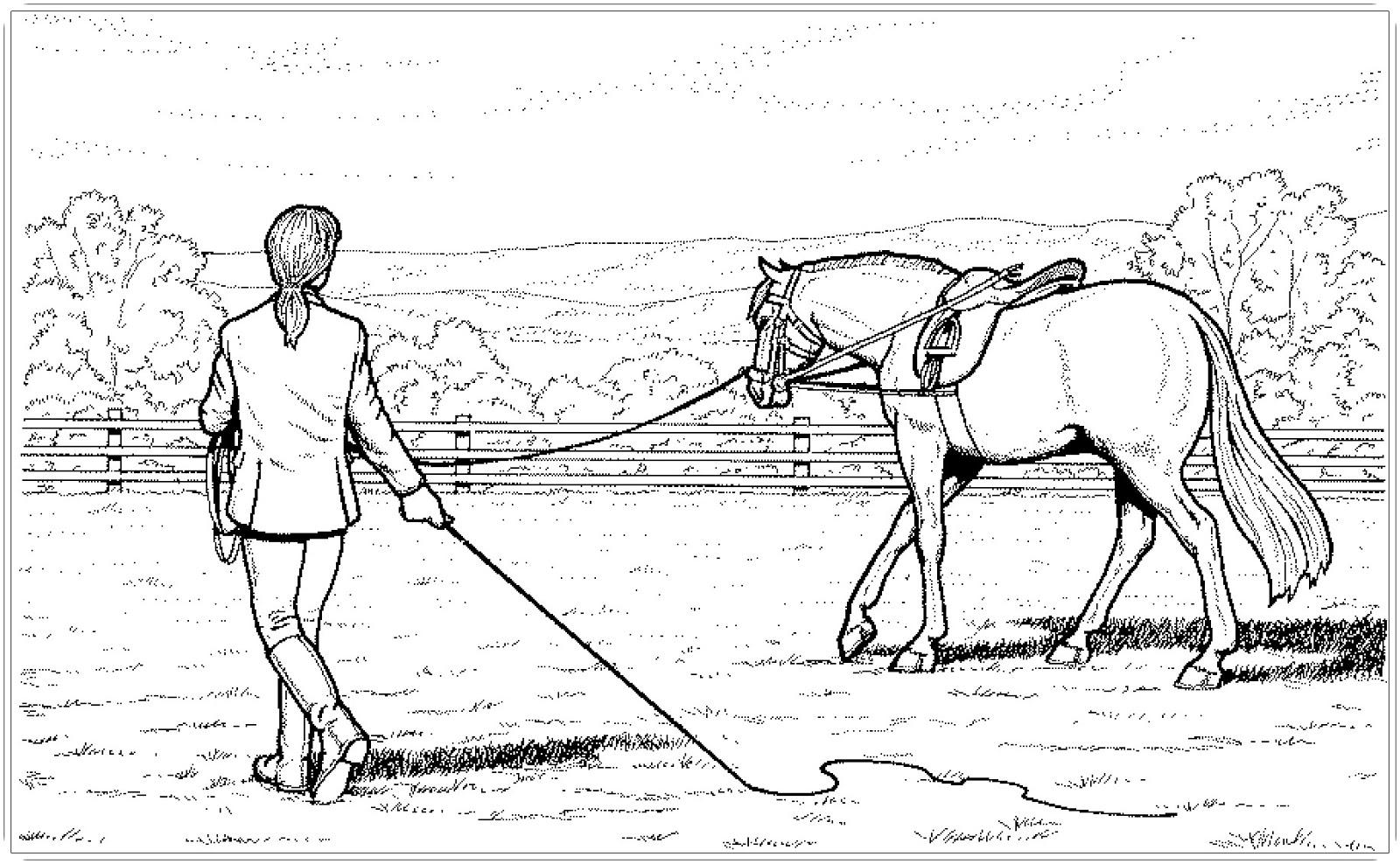 Malvorlagen Ausdrucken Pferde Malvorlagen Pferde Kostenlos