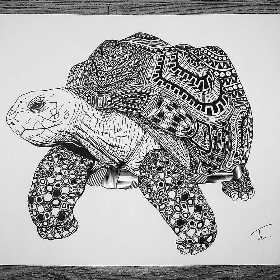 03-Zentangle-tortoise-Tobias-www-designstack-co