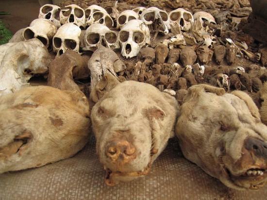 inilah pasar santet voodoo jimat paling mengerikan di dunia