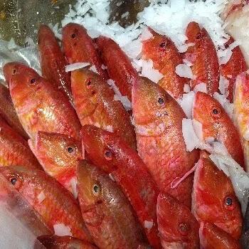 राणी, शेवटो मासा, Red mullet fish name in Marathi