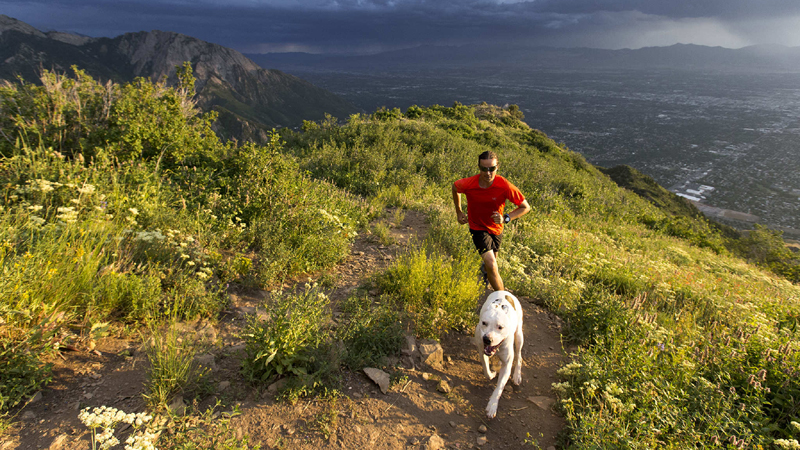 Top 5 Dog-Friendly Hikes on the East Coast