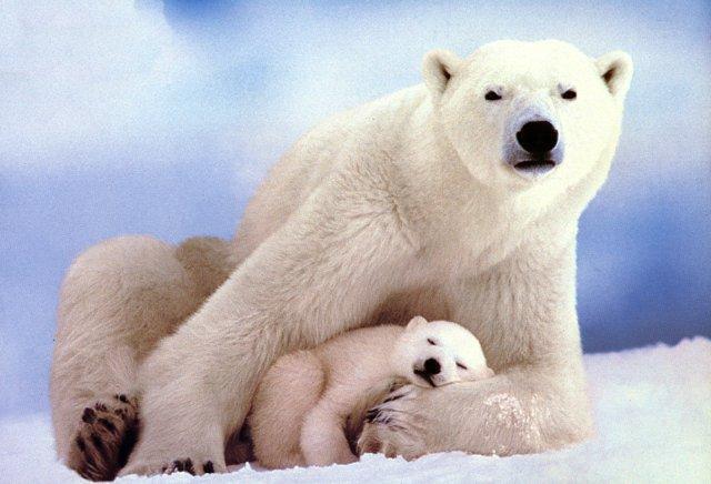 Egnorance: Global warming cranks jump the shark eat the ...