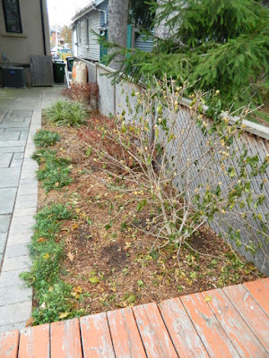 Oakwood Village Toronto Fall Backyard Cleanup after by Paul Jung Gardening Services