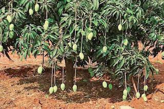 cash-crop-in-bihar