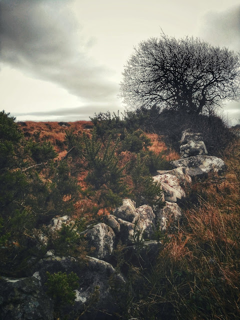 moody landscape, stone wall and a tree