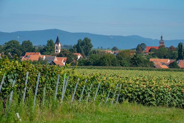 Durchs Tiefental bei Mühlhofen | Wandern Südliche Weinstraße | Billigheim-Ingenheim | Wanderung Pfalz 19