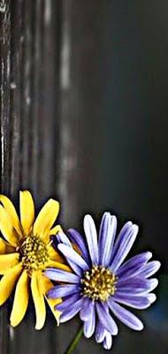 تنزيل خلفيات بلو BLU تحميل ﺃﺟﻤﻞ خلفيات و صور لشاشة بلو BLU افضل خلفيات هواتف بلو Wallpapers for mobile Blu افضل خلفيات موبايل بلو BLU