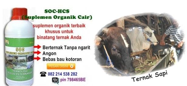 Obat Untuk Meningkatkan Bobot Ternak Sapi