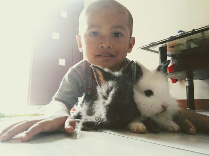 Cara memelihara dan merawat kelinci
