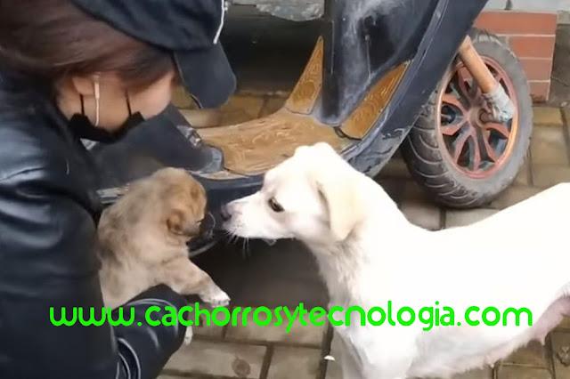 cachorro puppy dog adoptado despedida shurkonrad cachorros y tecnologia 2