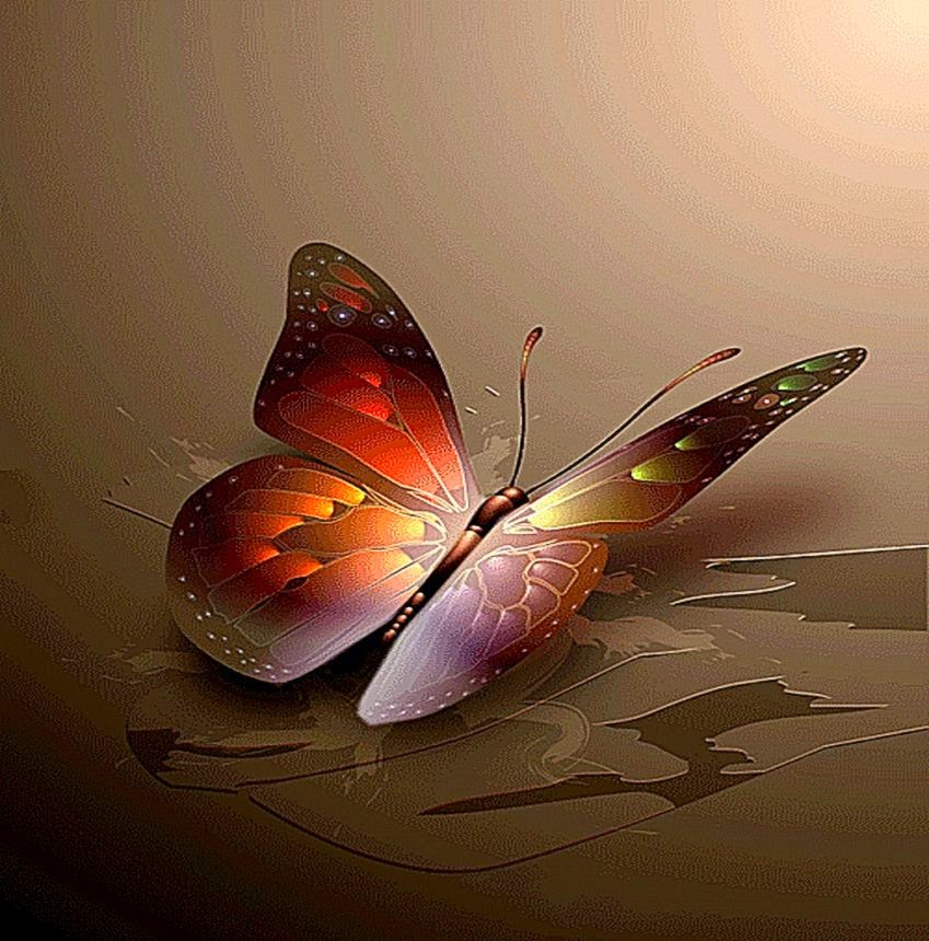 Beautiful Color Butterfly Wallpapers Hd