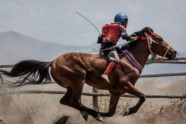 Kuda Balap