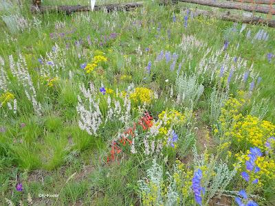 New Mexico roadside wildflowers
