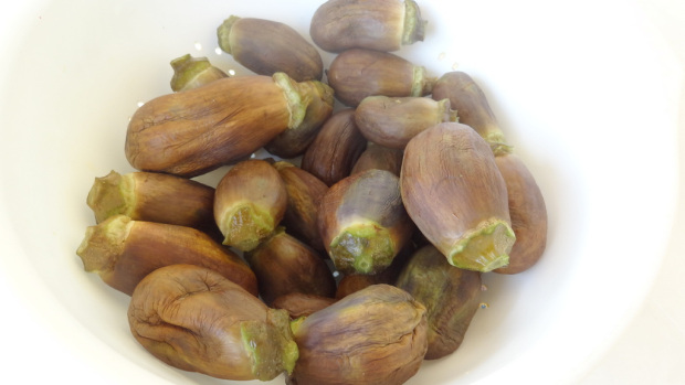 m going to show you how to preserve eggplants Batenjan Makdous (Preserved Eggplants in Olive Oil) Recipe
