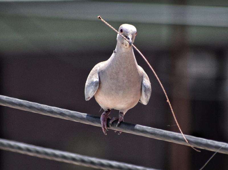 """Bird or Birds"" - Photography Contest Entry by Rajesh Kumar Soni"