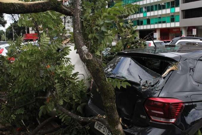 TEMPORAL E PREJUÍZO: Chuva com vento derruba arvores em cima de carros; veja vídeo