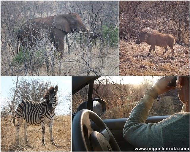 Safari-Crocodile-River-Sudáfrica