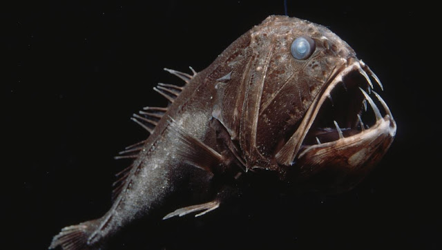 The Mystery of the Bottom: Strange Creatures Found in Salt Water