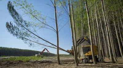 Benefits of Forestry Investments